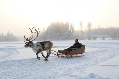 Reindeer Safaris at Tahko