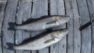 Viehekalastusta Lastukoskella kesäisin ja lumettomaan aikaan